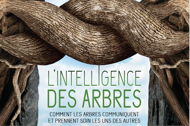 L intelligence des arbres